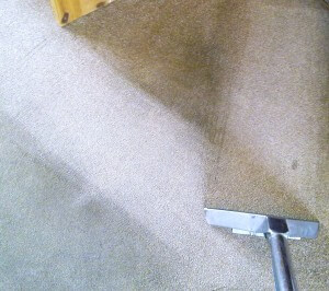 Getting stains off the carpet